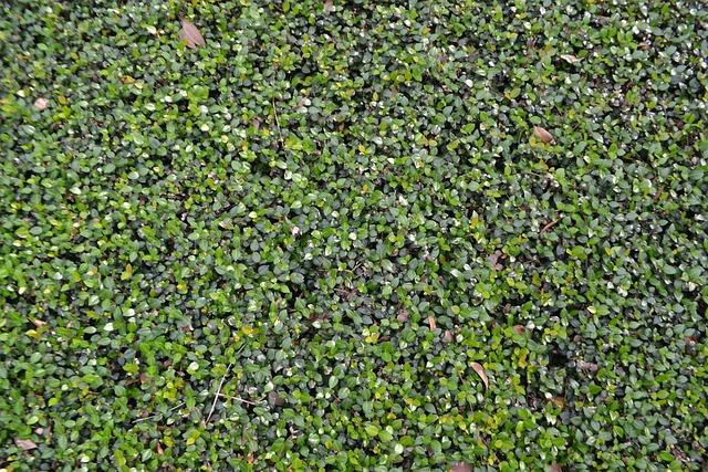 Vine, Hedge, Lawn Care, Background, Backdrop, Natural