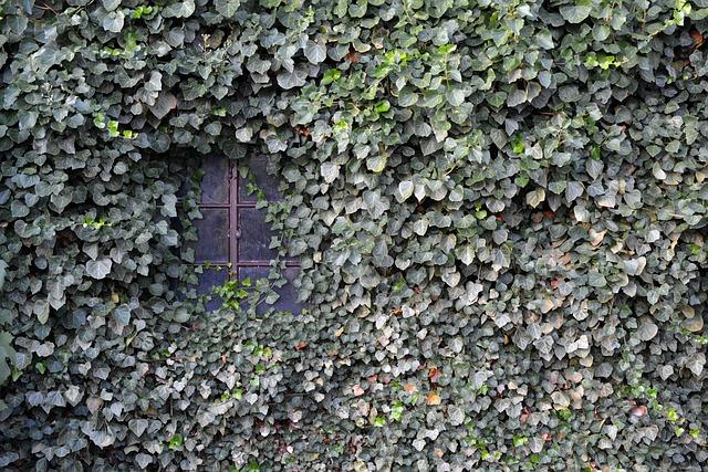 Ivy, Wall, Window, Ingrowing, Background, Facade