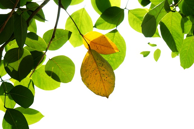Natural, Green Leaf, Yellow Leaves, Background