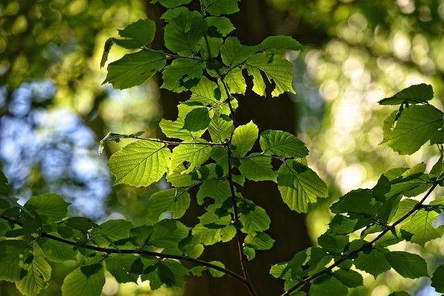 Foliage, Leaves, Branch, Sunlight, Bokeh, Backlight