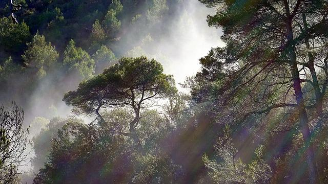 Fog, Trees, Meteorology, Landscape, Pine, Backlight