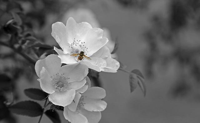 Flower, Blossom, Bloom, Plant, White, Backlighting
