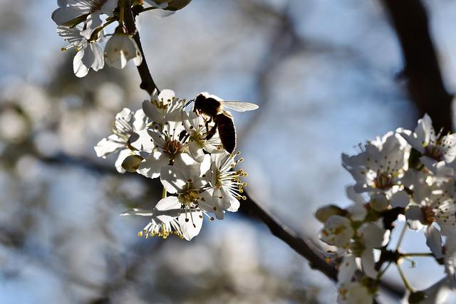 Bee, Honey Bee, Backlighting, Insect, Pollen, Nectar