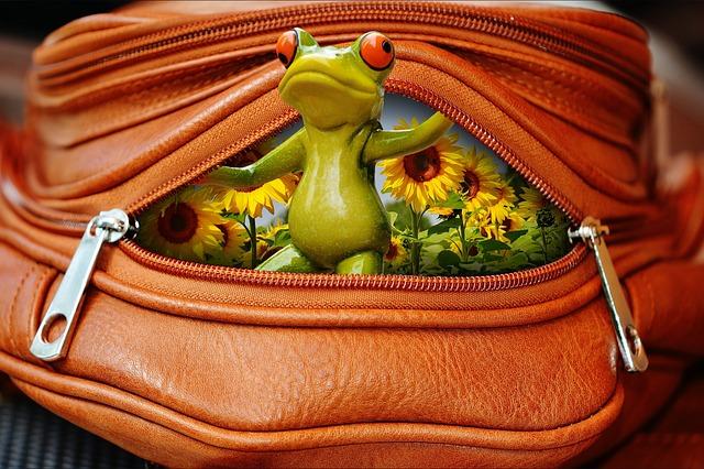 Frog, Bag, Zip, Open, Funny, Cute, Sweet
