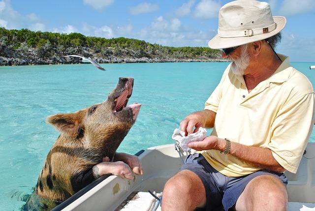 Staniel Cay, Exumas Bahamas, Swimming Pig, Bahamas