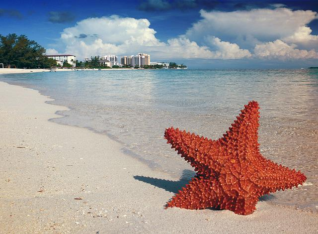 Starfish, Sand, Bahamas, Nassau, Sea, Tropical