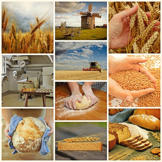 Bread, Bake, Harvest, Wheat, Bake Bread, Craft, Baker