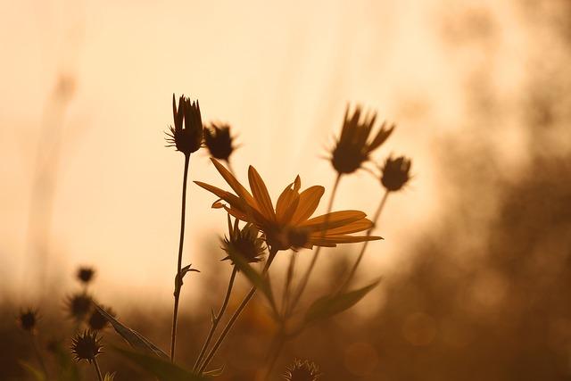 Jerusalem Artichoke, Yellow Flower, Sunflower, Baking