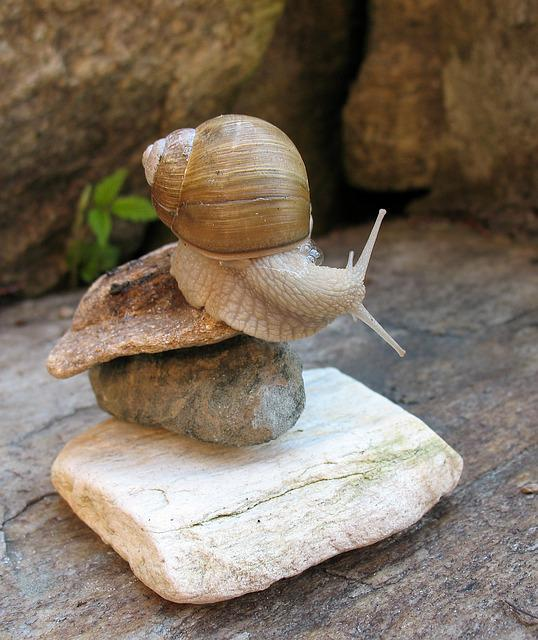 A Pet, Acrobatics, Snail, White, Rocks, Balance