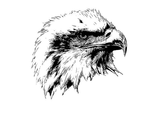 Bald Eagle, Eagle, Raptor, Beak, Feathers, Animal, Bird