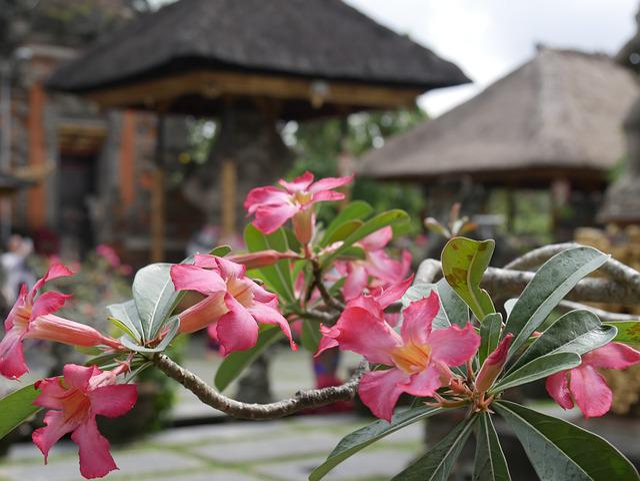 Bali, Asia, Indonesia