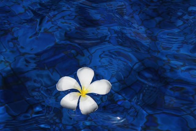 Flower, Water, Spring, Plant, Plumeria, Flowers, Bali