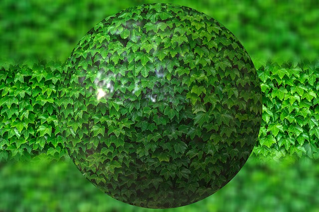 Ball, Leaves, Ivy, About, Nature, Green, Plant, Flora