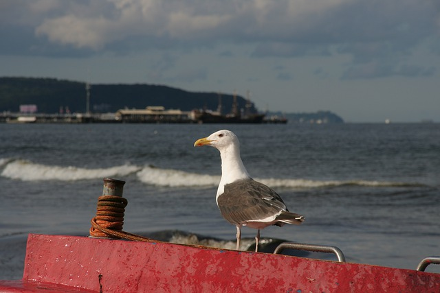 Baltic Sea Coast, Poland, Sopot, Boats, Bird, Seagull