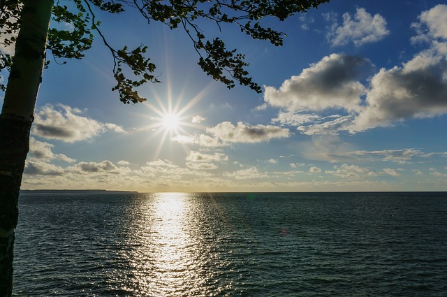 Sea, Baltic, Tree, Water, Sun, Clouds, Sky
