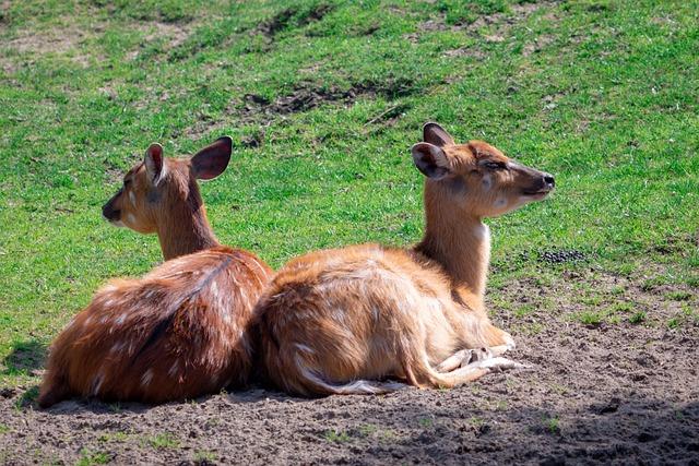 Roe Deer, Fawn, Lying, Young Deer, Young, Bambi, Deer