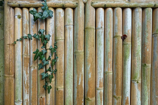 Bamboo Fence, Fence, Ivy, Bamboo, Creeper, Garden Fence