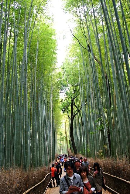 Bamboo Forest, Sagano, Forest, Kyoto, Arashiyama