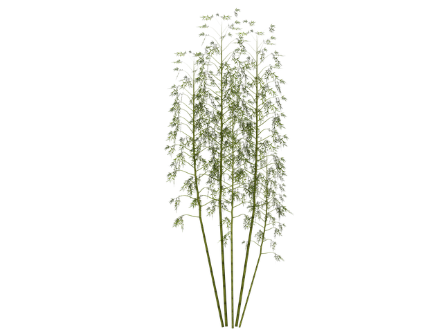 Bamboo, Plant, Wellness, Digital Art, Isolated