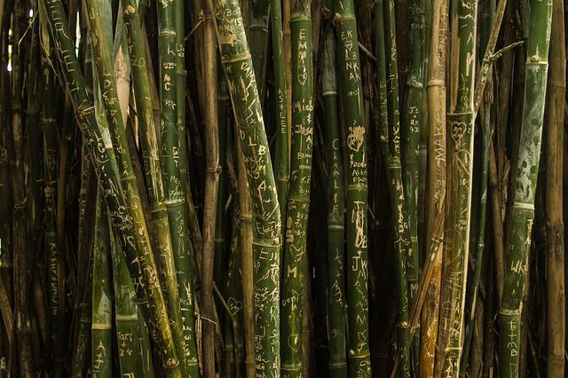 Bamboo, Green, Nature, Pattern, Texture, Trees