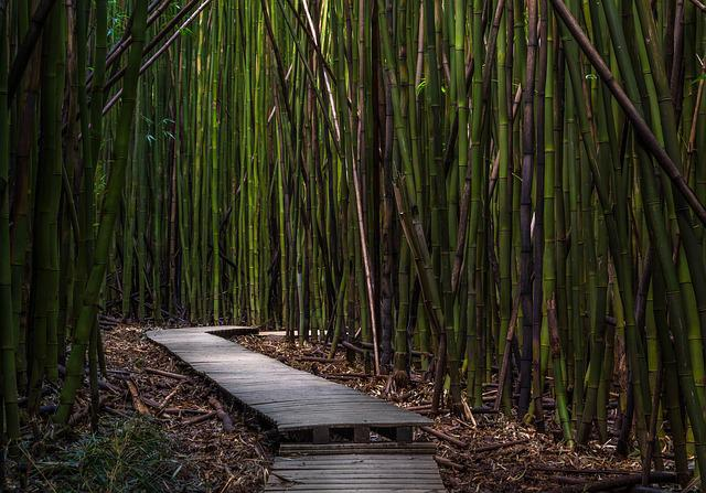 Bamboo Trees, Dock, Environment, Growth, Outdoors, Wood