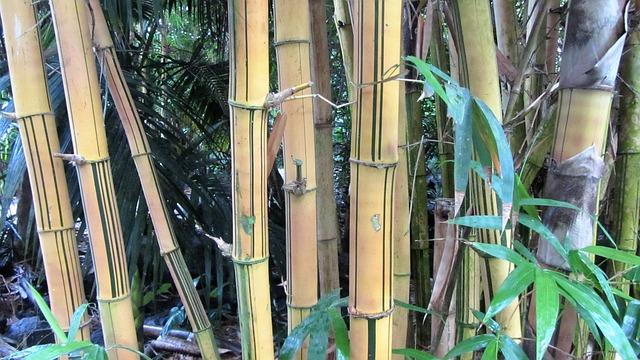 Bamboo, Bamboo Wood, Tropics, Tropical