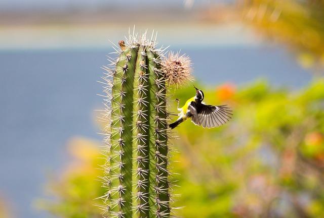 Bananaquit, Cactus, Small Bird, Wings, Bonaire