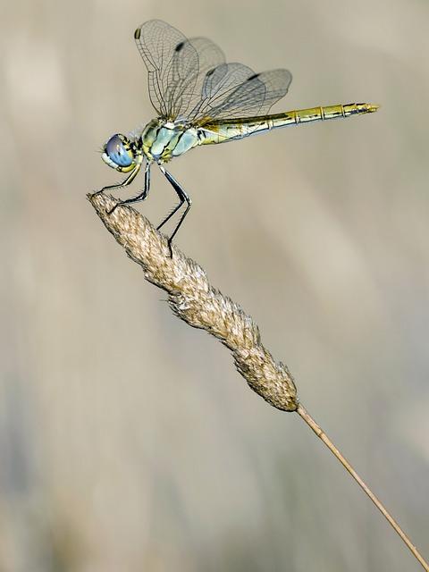 Grasshopper, Loving, Animal, Bangladesh
