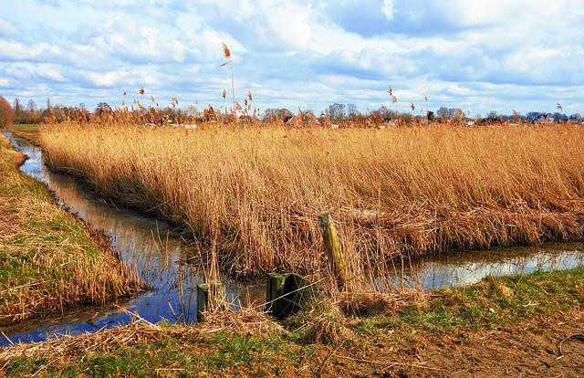 Ditch, Water, Wetland, Marsh, Reed, Vegetation, Banks