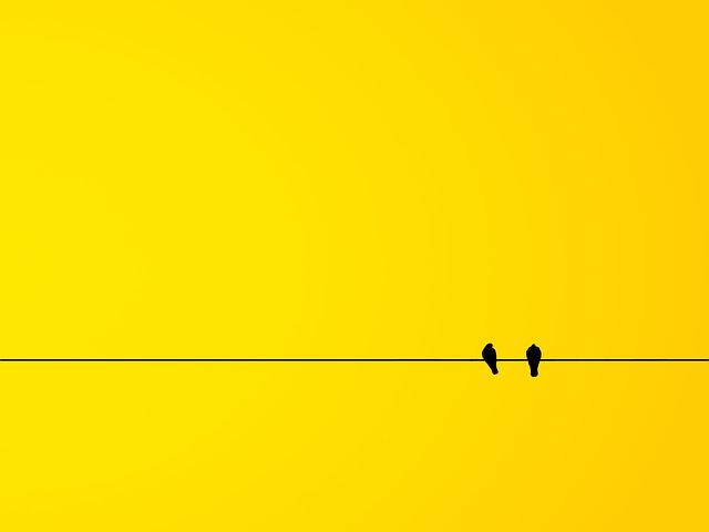 Bird, Birds, Minimalism, Yellow, The Background, Banner