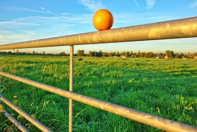 Orange, Fruit, Bar, Gate, Countryside, Blue Skies