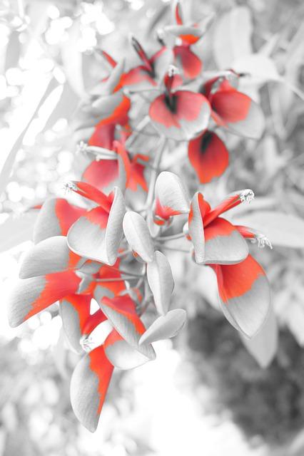 Heart, Flower, Bnnrrb, Barbara Bonanno, Photo, Leaf