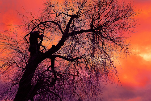 Tree, Branch, Bare Tree, Bare Branch, Winter Tree