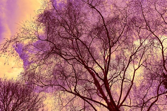 Tree, Tree Top, Tree Crown, Branch, Bare Tree