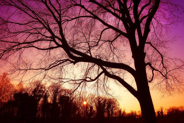 Tree, Bare Tree, Bare Branches, Silhouette, Nature