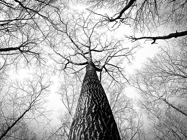 Forest, Trees, Branches, Tree Canopy, Bare Trees, Woods