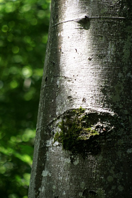 Beech, Booking Master, Forest, Tree, Nature, Log, Bark