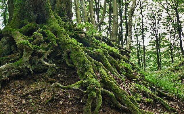 Root, Tree Root, Tree, Nature, Log, Bark, Old, Wood