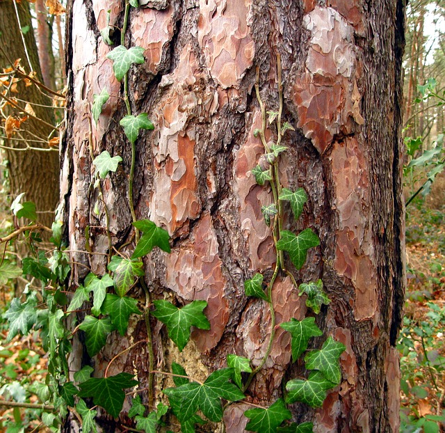 Tree, Log, Bark, Forest, Green, Creeper, Old, Nature
