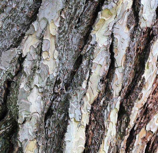 Pine, Tree Bark, Bark, Wood, Structure, Nature, Conifer