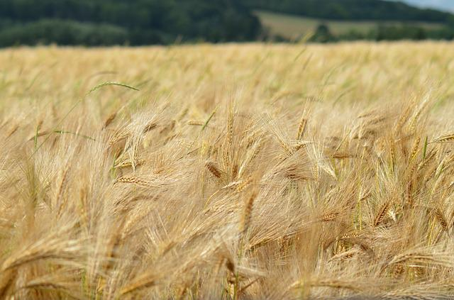 Barley, Cereal, Agriculture, Healthy Food, Power
