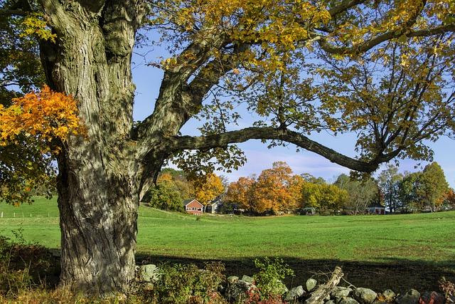 Fall, Autumn, Colors, Nature, Barn, Farm, Tree, Foliage