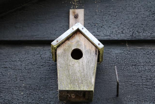 Birdhouse, Barn, Bird