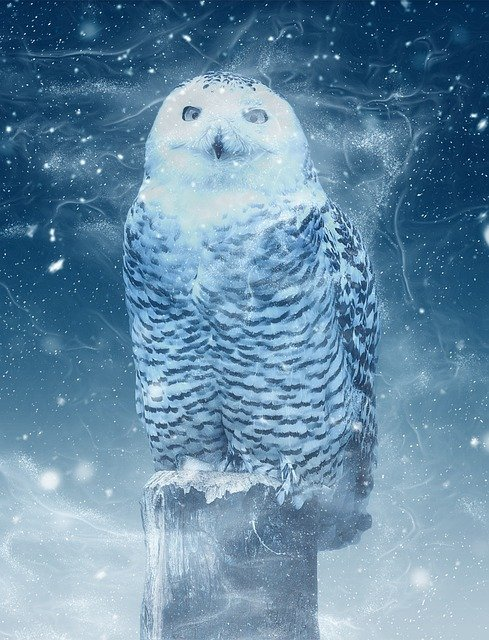 Snow Owl, Owl, Barn Owl, Eyes, Bird, Feather, Animal
