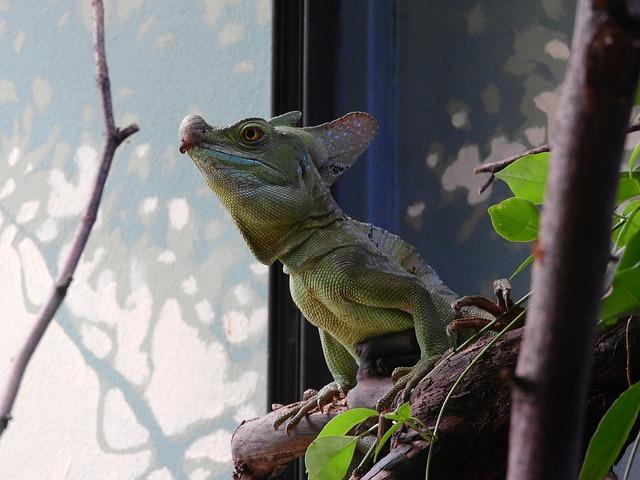Basilisk Green, Basiliscus Plumifrons, The Prague Zoo