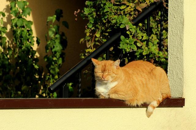 Cat, Kitten, Red Cat, The Sun, Animals, Bask, Autumn