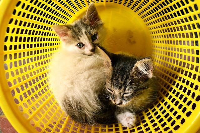 Cats, Minima, Babies, Baby, Dream, Basket, Yellow, Game