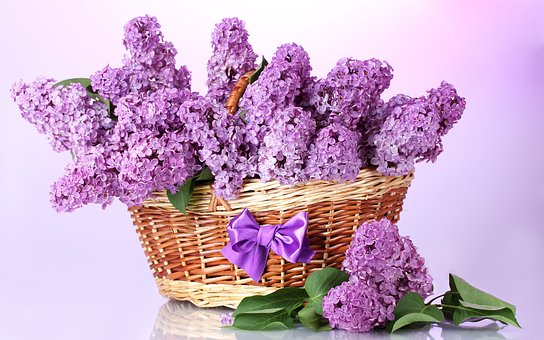 Basket, Lilac, Bow