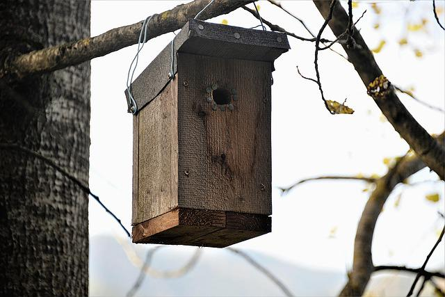 Nesting Box, Wood, Bat Nest Box, Nature Conservation