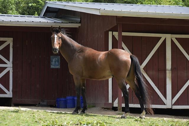 Farm, Wood, Barn, Grass, Outdoors, Horse, Bay, Stable
